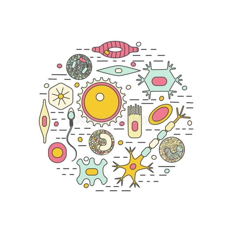 Διαφορετικοί ανθρώπινοι τύποι κυττάρων διανυσματική απεικόνιση