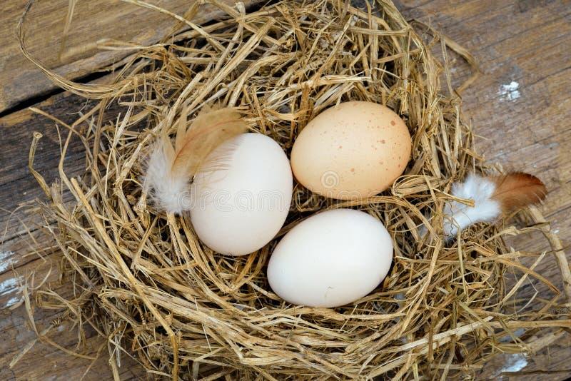 Διαφορετικοί τύποι αυγών στο κύπελλο στον ξύλινο πίνακα στοκ εικόνες