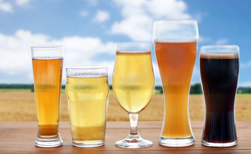 Διαφορετικοί τύποι γυαλιών μπύρας πέρα από τον τομέα δημητριακών στοκ εικόνα με δικαίωμα ελεύθερης χρήσης