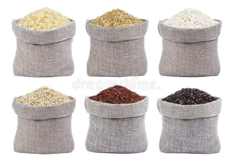 Διαφορετικοί τύποι ρυζιών που απομονώνονται στο άσπρο υπόβαθρο στοκ φωτογραφίες με δικαίωμα ελεύθερης χρήσης