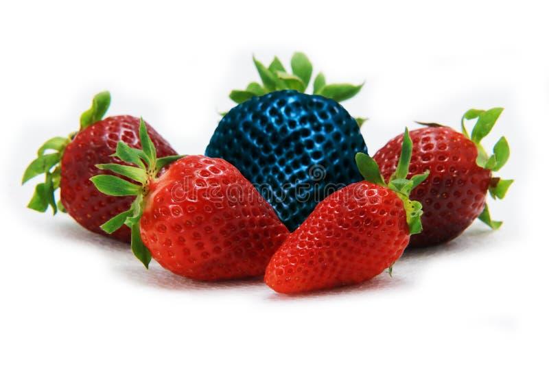 Διαφορετικός από τη μόνη μπλε φράουλα υπολοίπου Έννοια για τα γενετικά τροποποιημένα τρόφιμα στοκ φωτογραφίες
