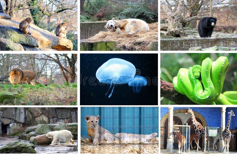 διαφορετικός ζωολογικός κήπος του Βερολίνου ζώων στοκ φωτογραφία
