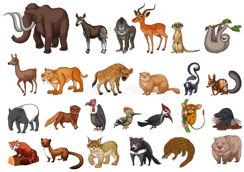 Διαφορετικός τύπος άγριων ζώων στο λευκό ελεύθερη απεικόνιση δικαιώματος