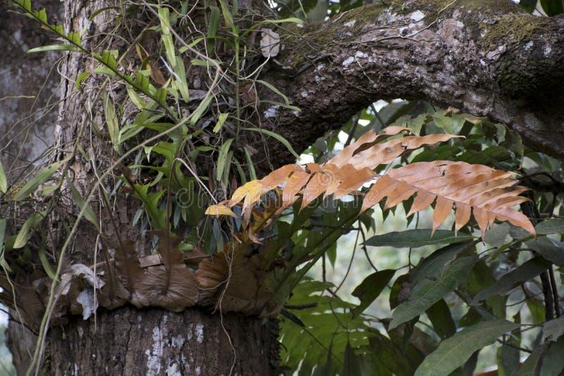 Διαφορετικό ξηρό κίτρινο φύλλο στο πράσινο υπόβαθρο δέντρων στοκ εικόνες