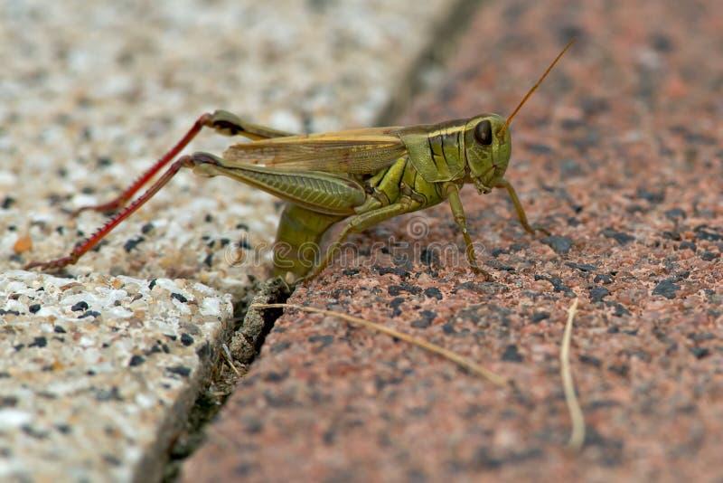 Διαφορικό Grasshopper στοκ φωτογραφίες