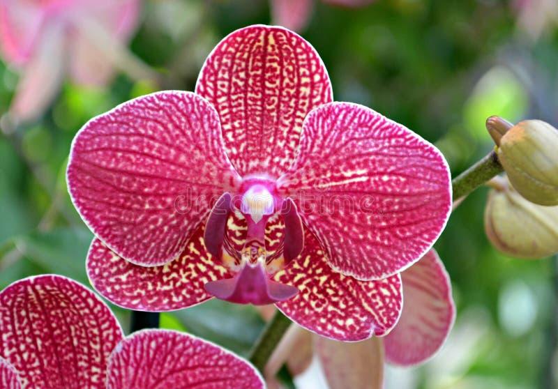 Διαφοροποιημένο orchid στοκ φωτογραφία με δικαίωμα ελεύθερης χρήσης