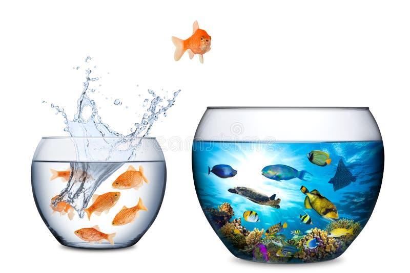 Διαφυγή ψαριών στην έννοια ελευθερίας στοκ εικόνα με δικαίωμα ελεύθερης χρήσης