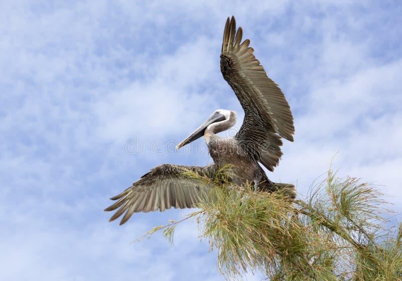 Διαδίδοντας φτερά στοκ φωτογραφίες με δικαίωμα ελεύθερης χρήσης