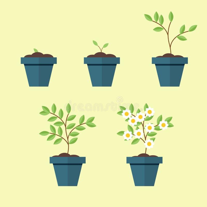 Διαδικασία έναν houseplant σε ένα δοχείο από το σπόρο στα ανθίζοντας δέντρα Διάνυσμα, απεικόνιση που απομονώνεται σε κίτρινο ελεύθερη απεικόνιση δικαιώματος