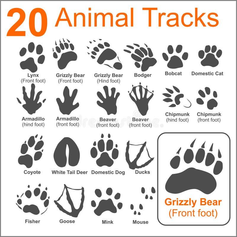 Διαδρομές ζώων - διανυσματικό σύνολο διανυσματική απεικόνιση