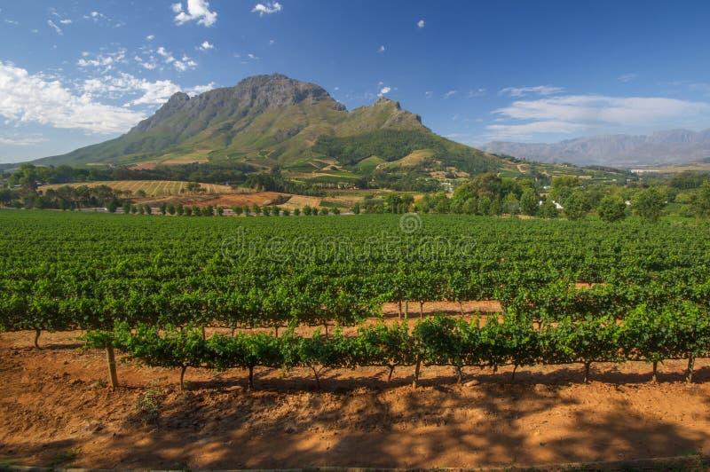 Διαδρομές κρασιού της American Express Stellenbosch, Νότια Αφρική στοκ εικόνα