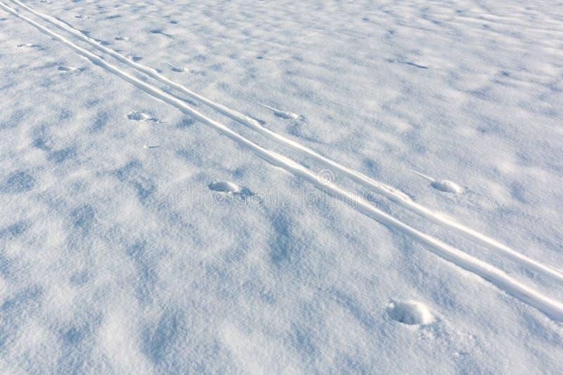 Διαδρομή σκι που διασχίζει άσπρο snowdrift στοκ εικόνες με δικαίωμα ελεύθερης χρήσης