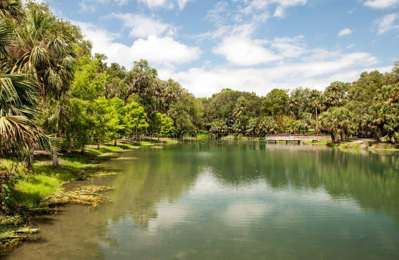 Διδυμοι αναπηδούν το πάρκο στη Φλώριδα στοκ φωτογραφία με δικαίωμα ελεύθερης χρήσης