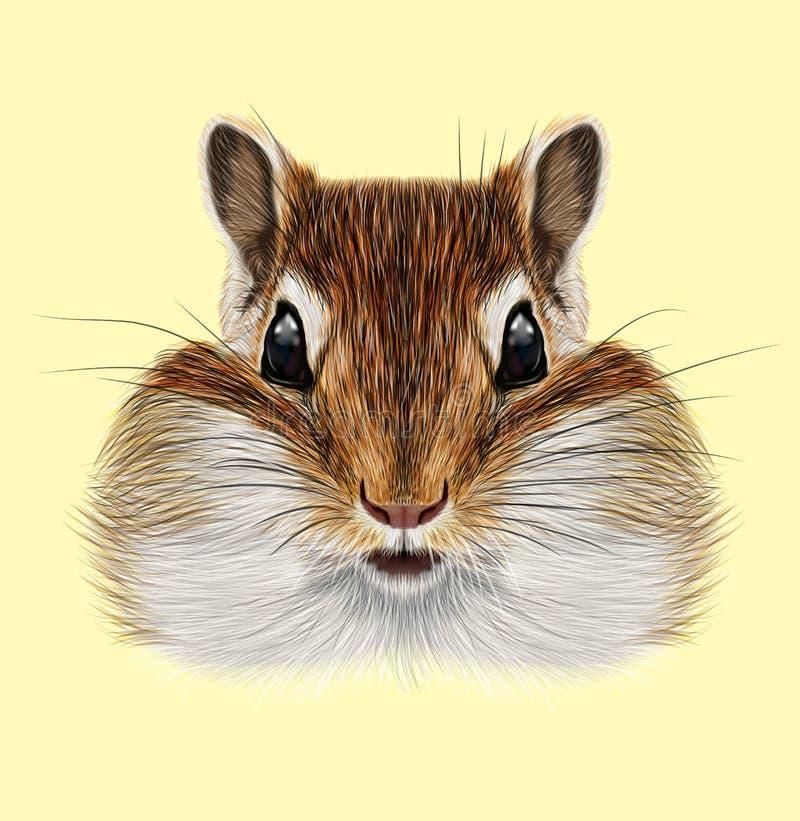 Διευκρινισμένο πορτρέτο Chipmunk ελεύθερη απεικόνιση δικαιώματος