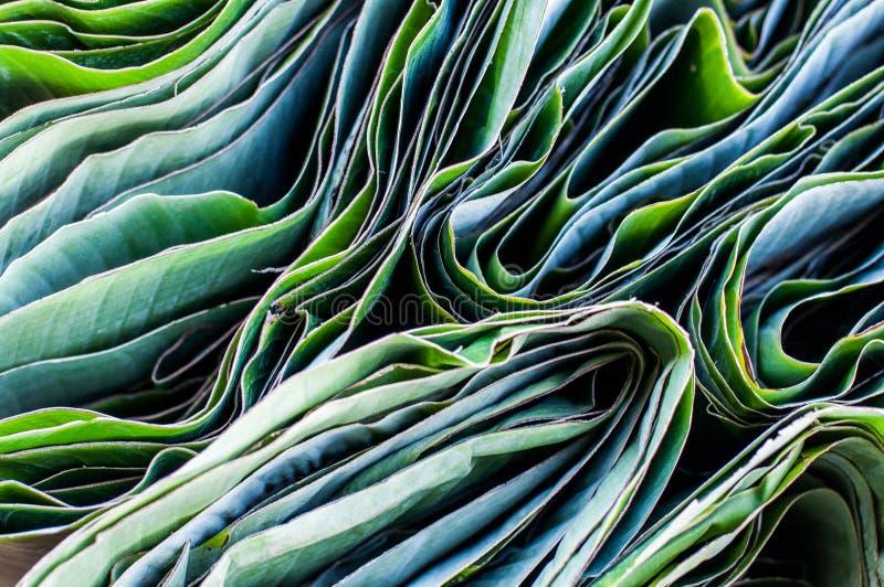 Διπλωμένα φύλλα μπανανών στοκ εικόνες με δικαίωμα ελεύθερης χρήσης