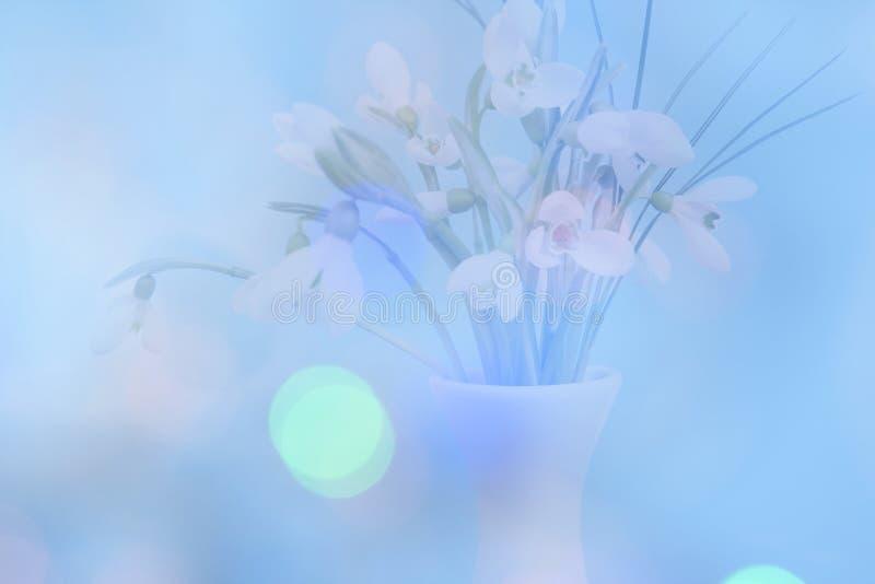 Διπλή έκθεση των λεπτών snowdrops με ένα μπλε backgrou bokeh στοκ φωτογραφίες
