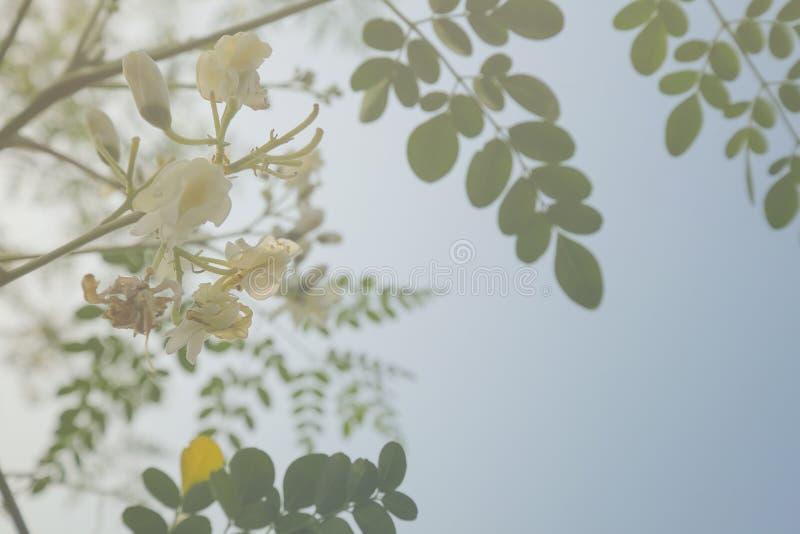 Διπλό λουλούδι έκθεσης στοκ εικόνα