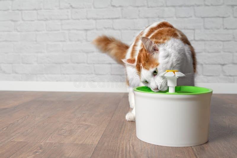 Διψασμένο μακρυμάλλες πόσιμο νερό γατών από μια πηγή κατανάλωσης κατοικίδιων ζώων στοκ φωτογραφία