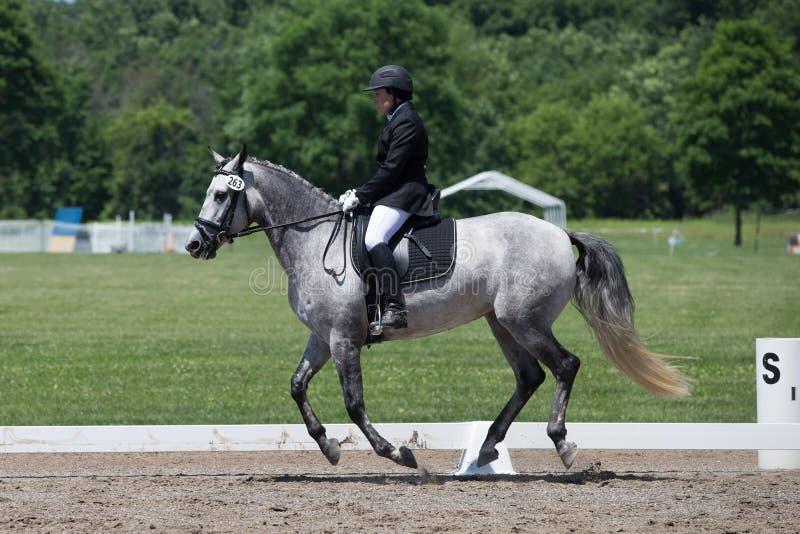 Δοκιμή 2 επιπέδων κατάρτισης εκπαίδευσης αλόγου σε περιστροφές USEF στοκ φωτογραφίες με δικαίωμα ελεύθερης χρήσης