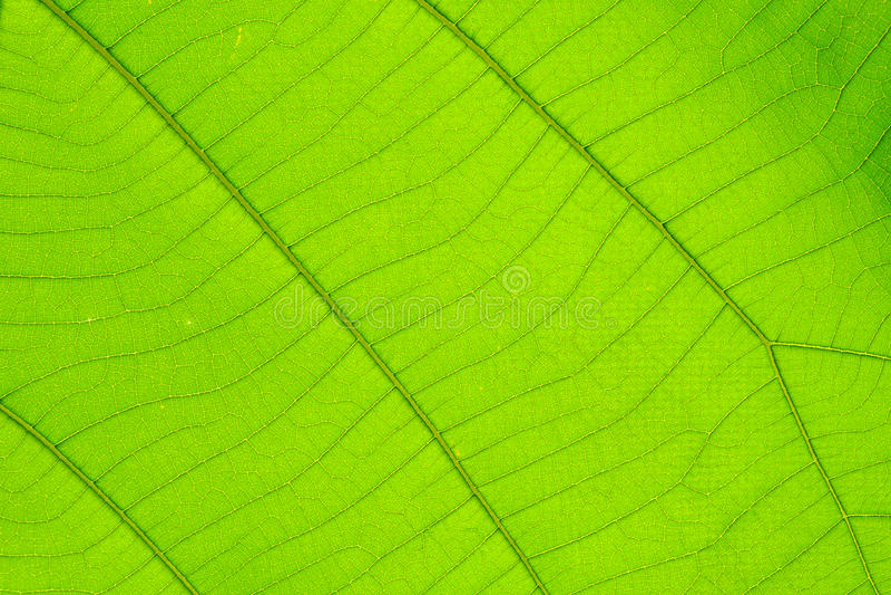 Δομή του φυσικού υποβάθρου φύλλων στοκ εικόνες