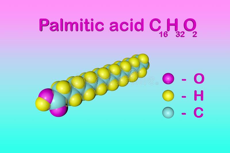 Δομικός χημικός τύπος και μοριακό πρότυπο του φοινικέλαιου παλμιτικού οξέος, το πιό κοινό κορεσμένο λιπαρό οξύ ελεύθερη απεικόνιση δικαιώματος