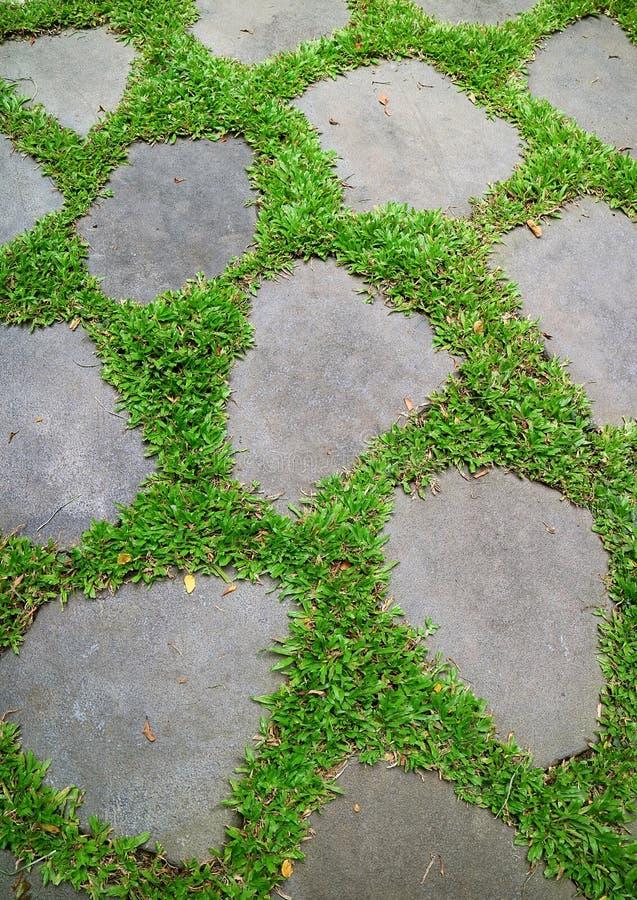 Δονούμενες πράσινες χλόες που καίγονται μεταξύ να περπατήσει κήπων των πετρών στοκ εικόνες με δικαίωμα ελεύθερης χρήσης