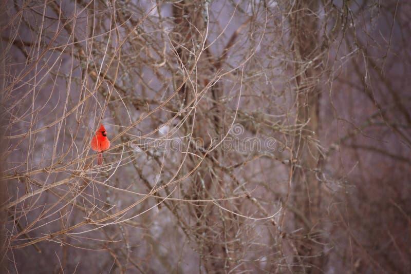 Δονούμενη βασική στήριξη σε ένα δέντρο στοκ εικόνες