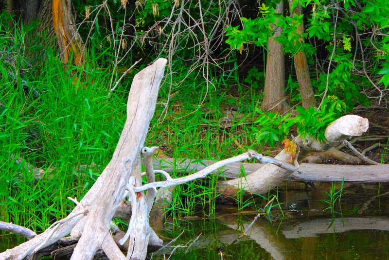 Δονούμενη πράσινη χλόη τοπίων όχθεων ποταμού φυσική και πεσμένο δέντρο στοκ εικόνες με δικαίωμα ελεύθερης χρήσης
