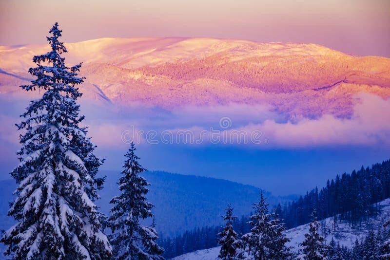 Δονούμενο ρόδινο χειμερινό ηλιοβασίλεμα υψηλό στα βουνά στοκ εικόνες