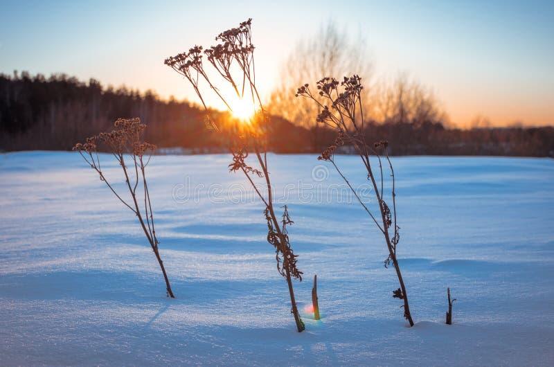 Δορά από το χιόνι στοκ εικόνα