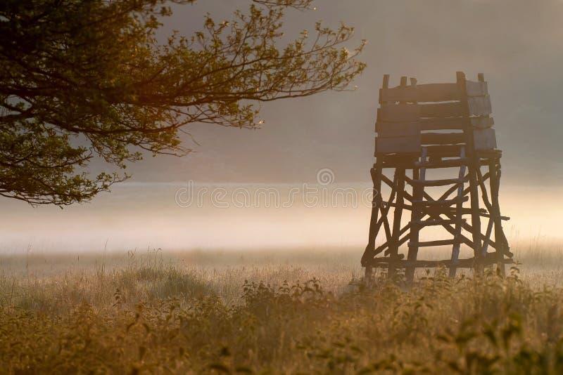 Δορά κυνηγιού στοκ φωτογραφίες