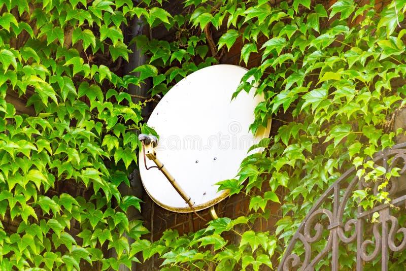 Δορυφορικό πιάτο μεταξύ του κλάδου των δέντρων, η εγκατάσταση ενός δορυφορικού πιάτου, επικοινωνία TV στοκ φωτογραφίες