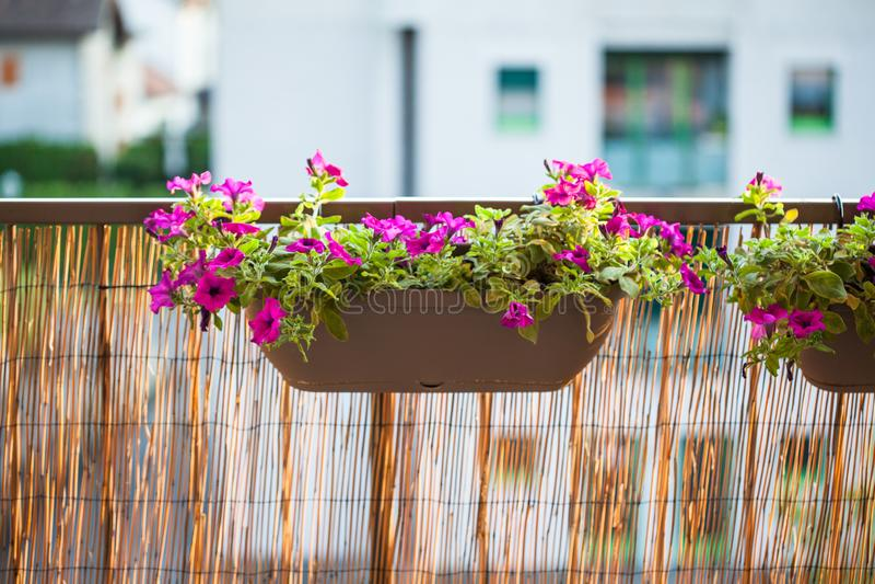 Δοχεία κήπων θερινών μπαλκονιών με τα λουλούδια πετουνιών στοκ φωτογραφίες