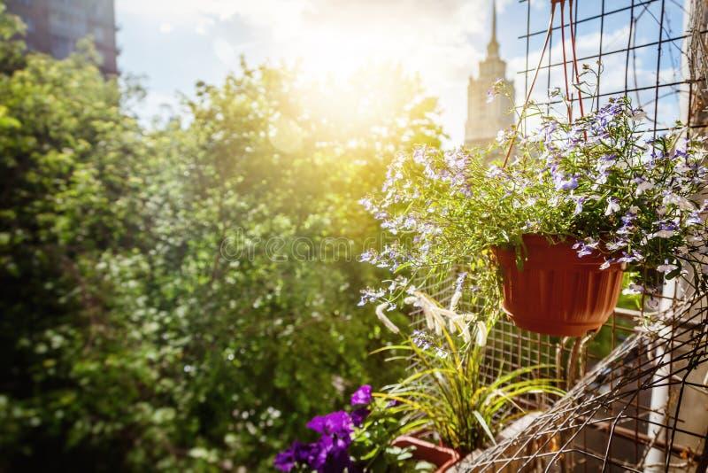 Δοχεία με τα λουλούδια στο μπαλκόνι, μια ηλιόλουστη θερινή διάθεση στοκ φωτογραφίες