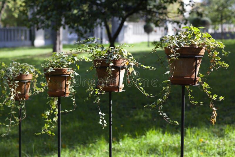 Δοχεία πράσινων εγκαταστάσεων στον κήπο στοκ εικόνα με δικαίωμα ελεύθερης χρήσης