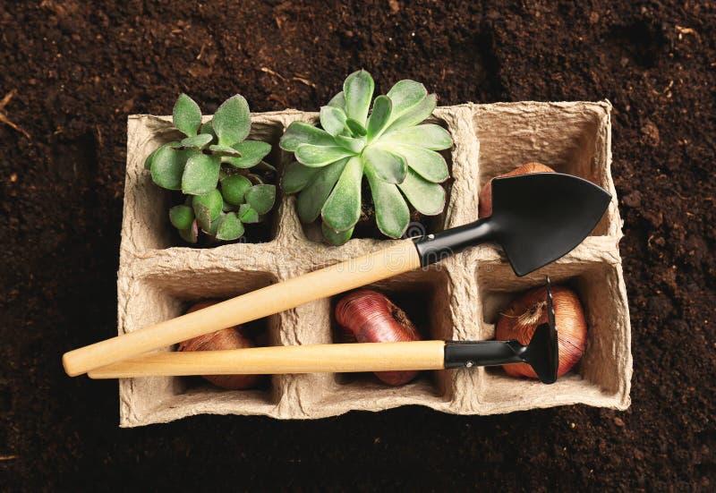 Δοχεία τύρφης με τις εγκαταστάσεις, τους βολβούς και τα εργαλεία κηπουρικής στο χώμα στοκ φωτογραφίες με δικαίωμα ελεύθερης χρήσης