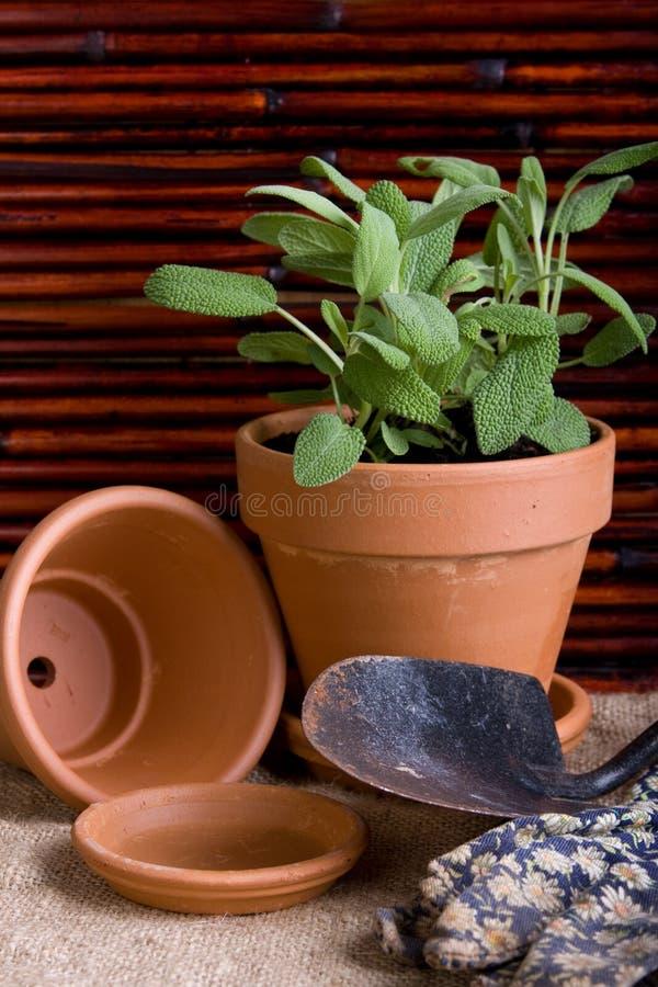 δοχεία χορταριών κηπουρικής στοκ εικόνες με δικαίωμα ελεύθερης χρήσης