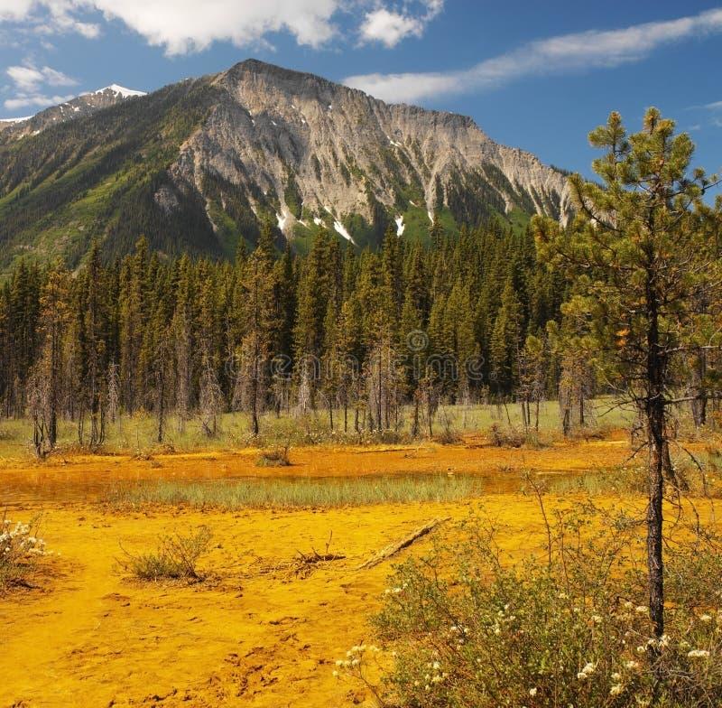Δοχεία χρωμάτων - Kootenay N.P. - Καναδάς στοκ φωτογραφία με δικαίωμα ελεύθερης χρήσης