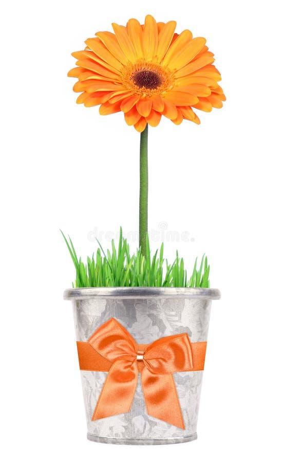 δοχείο δώρων λουλουδ&iota στοκ φωτογραφία