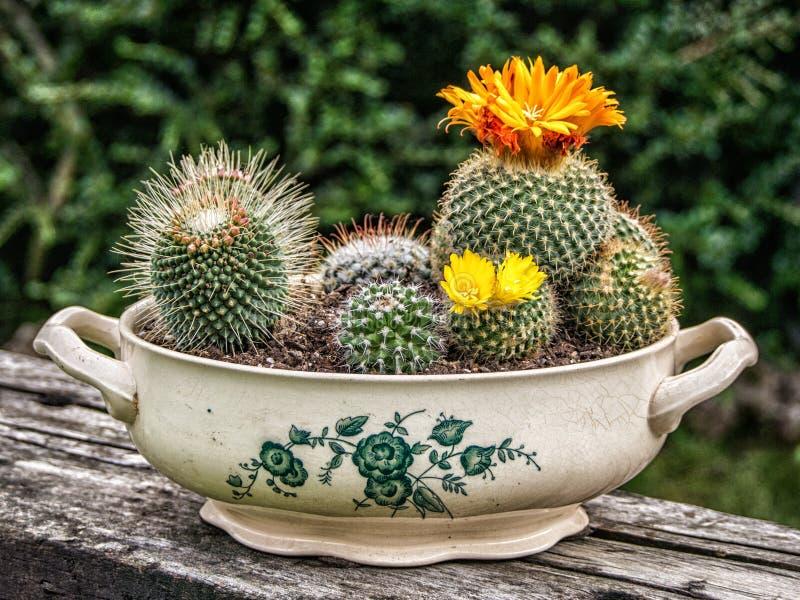 Δοχείο κάκτων με το κίτρινο λουλούδι στοκ φωτογραφία με δικαίωμα ελεύθερης χρήσης
