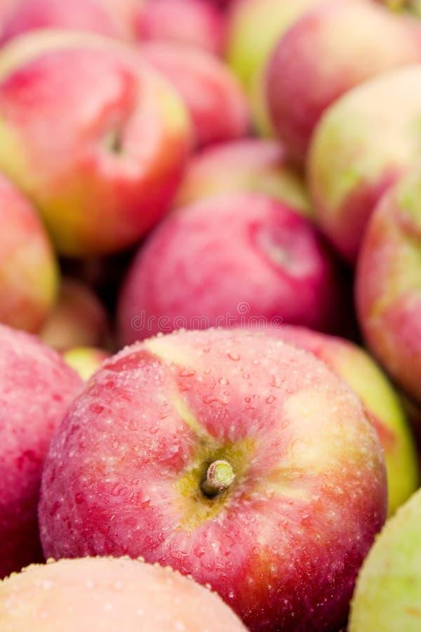 δοχείο μήλων στοκ εικόνα