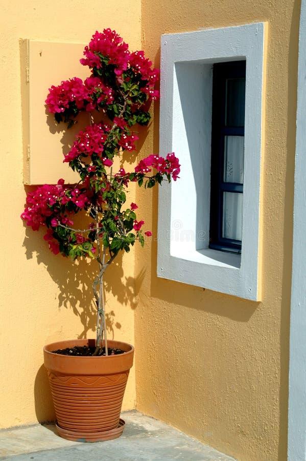 δοχείο νησιών της Ελλάδας λουλουδιών στοκ εικόνες