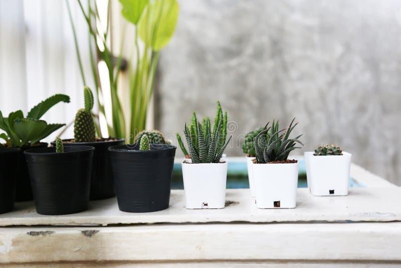 Δοχείο Succulents και εγκαταστάσεις διακοσμήσεων κάκτων στο εσωτερικό στοκ εικόνα με δικαίωμα ελεύθερης χρήσης