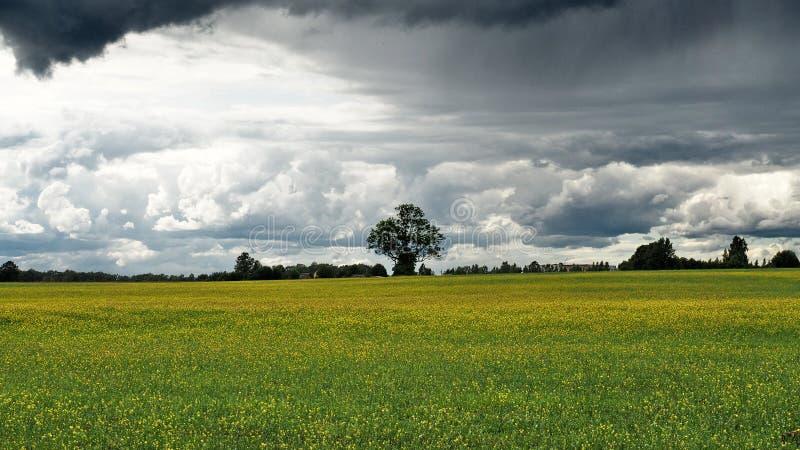 Δραματικά hunder σύννεφα Ñ 'πέρα από τους πράσινους τομείς στοκ εικόνες