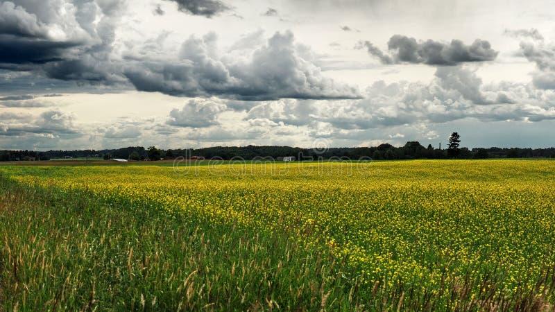 Δραματικά hunder σύννεφα Ñ 'πέρα από τους πράσινους τομείς στοκ φωτογραφία με δικαίωμα ελεύθερης χρήσης