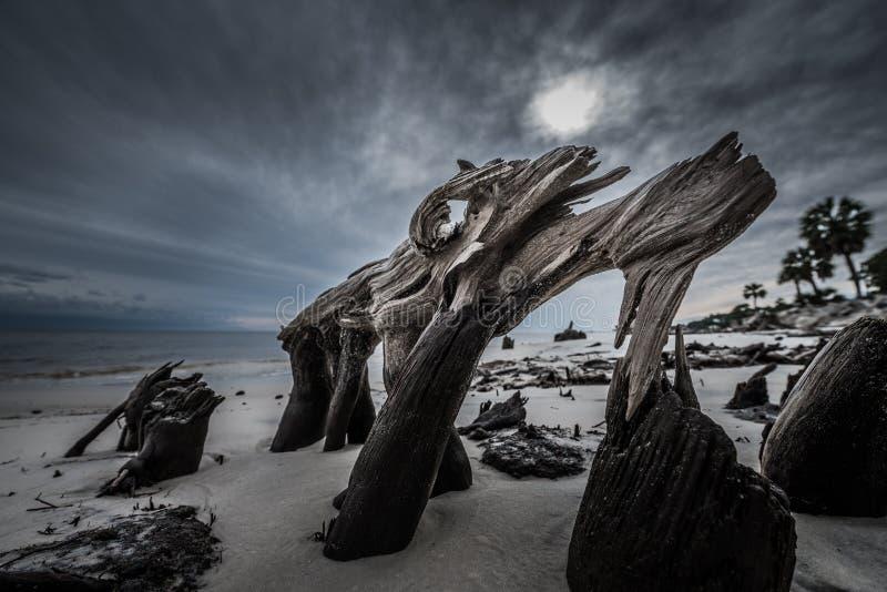 Δραματική παραλία Φλώριδα Carabelle ριζών δέντρων κυπαρισσιών σύννεφων στοκ φωτογραφία με δικαίωμα ελεύθερης χρήσης
