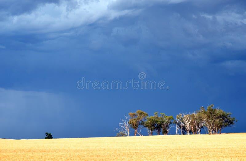 Δραματικός δυσοίωνος θυελλώδης ουρανός πέρα από την αυστραλιανή επαρχία στοκ φωτογραφία