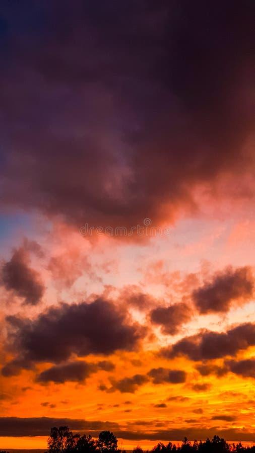 Δραματικός ουρανός ηλιοβασιλέματος και δασική σκιαγραφία στοκ φωτογραφίες