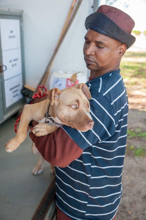 Δραστηριότητες για την καλή μεταχείριση των ζώων στο Cape Town Νότια Αφρική στοκ εικόνα με δικαίωμα ελεύθερης χρήσης