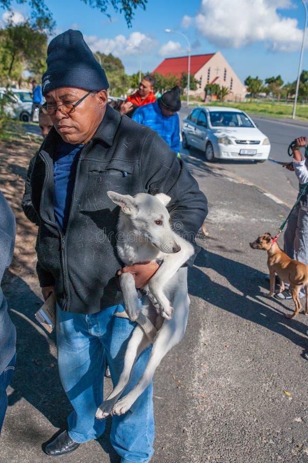 Δραστηριότητες για την καλή μεταχείριση των ζώων στο Cape Town Νότια Αφρική στοκ εικόνες